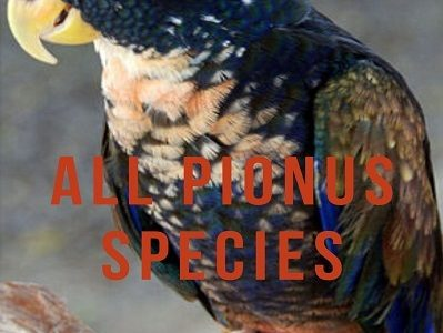 All Pionus Species