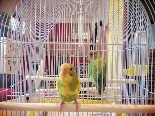 Small Cage size can lead to aggressive behavior over time