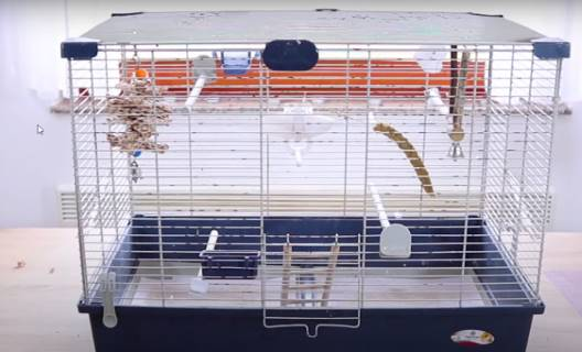 cage for single Lovebird